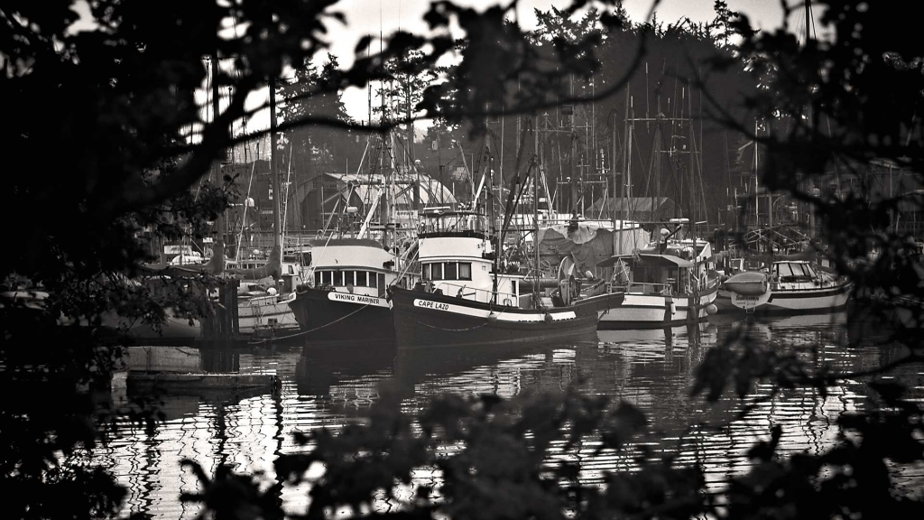 Portrait location idea, Tsehum Harbour, Sidney, BC.